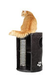 Cat on the top of the cat scratcher Stock Photos