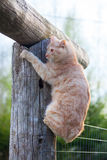 Cat on top of a log Royalty Free Stock Photography