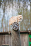 Cat on top of a log Royalty Free Stock Image