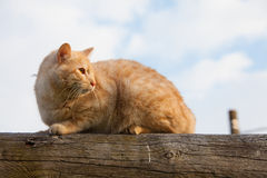 Cat on top of a log Royalty Free Stock Photo