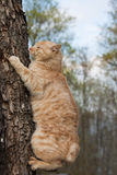Cat on top of a log Stock Image