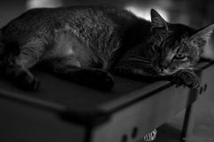 Cat Top Model siguiente Imágenes de archivo libres de regalías