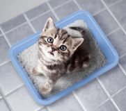 Cat top view sitting in litter box on bathroom floor Royalty Free Stock Images