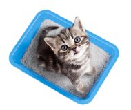 Cat top view sitting in litter box isolated. On white Royalty Free Stock Photos