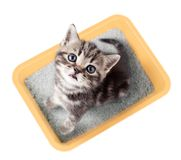 Cat top view sitting in yellow litter box isolated Royalty Free Stock Photos