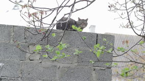 Cat On Top Of A Wall stock footage