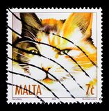 MOSCOW, RUSSIA - OCTOBER 3, 2017: A stamp printed in Malta shows cat Tortoiseshell (Felis silvestris catus), Cats serie, circa. MOSCOW, RUSSIA - OCTOBER 3, 2017 stock images