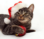Cat touch Christmas ball Stock Images