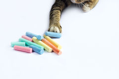 Cat touch colorful chalk scattered on white background Royalty Free Stock Photos
