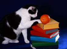 A cat touching a pile of colorful books with. A black and white cat touching a pile of colorful books with and orange Stock Photos