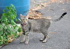 Cat touring around the village Royalty Free Stock Photography