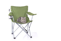 Cat on tourist armchair Royalty Free Stock Photos