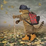 Cat tourist in park. The cat tourist in boots walks in the park. A stick is in his paw stock photography
