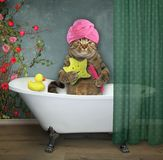 Cat in the bathroom 2. The cat with a towel around his head is in the bathroom royalty free stock images