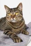 Cat on a towel Stock Photos
