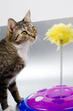 Cat and toy Stock Photo