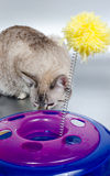 Cat and toy Royalty Free Stock Photo