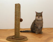 Cat with toy Stock Photography