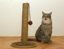 Cat with toy Royalty Free Stock Photo