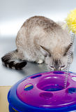 Cat and toy Royalty Free Stock Image