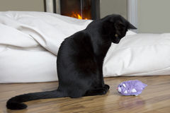 Cat and toy mouse. Black cat playing with purple toy mouse Stock Images