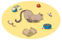 Cat with toys. Playful cat surrounded by cat toys Stock Photo