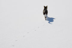 Cat tracks in snow. stock photos