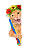 Cat in the traditional costume of a white banner. Stock Photography