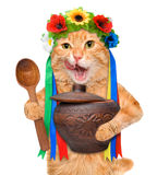 Cat in the traditional Ukrainian costume holds in paws national red borsch . Stock Photography
