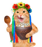 Cat in the traditional Ukrainian costume holds in paws soup national varenyky. Royalty Free Stock Photo