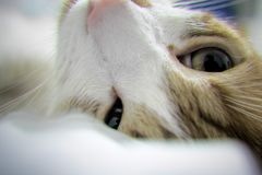 Cat Tranquility stockfoto