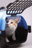 Cat in transport box. Isolated on background Stock Photos