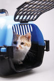 Cat in transport box. Isolated on background Royalty Free Stock Photo