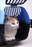 Cat in transport box. Isolated on background Stock Image