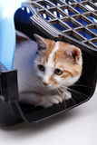 Cat in transport box. Close-up of a cat in transport box Royalty Free Stock Images