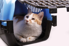 Cat in transport box. Isolated on white background Royalty Free Stock Photography