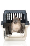 Cat in a transport box Stock Photo
