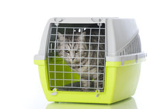 Cat with transport box. On white Royalty Free Stock Image