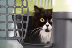 Cat in the transporter Stock Image