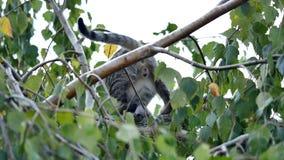Cat Trapped sur un arbre banque de vidéos
