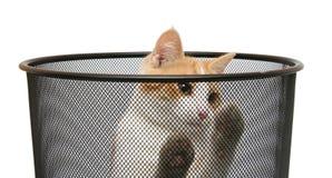 Cat in trash stock photo