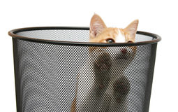 Cat in trash - run out Stock Images