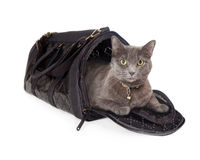 Cat in Travel Carrier Stock Photos