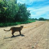 Cat in travel. The Kitty in Adventures Royalty Free Stock Images