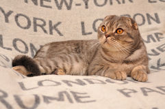 Cat-traveler on the bedspread Royalty Free Stock Image
