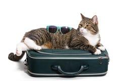 Cat traveler Stock Photo