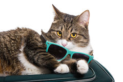 Cat traveler Stock Photography