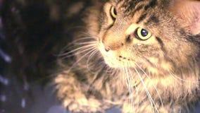 Cat traveler. HD. 1920x1080 stock footage