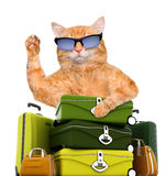 Cat traveler. Stock Image