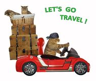 Cat travels by car 3 stock photos